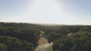 foto-video-de-boda-en-hacienda-montenmedio-vejer-cadiz-4